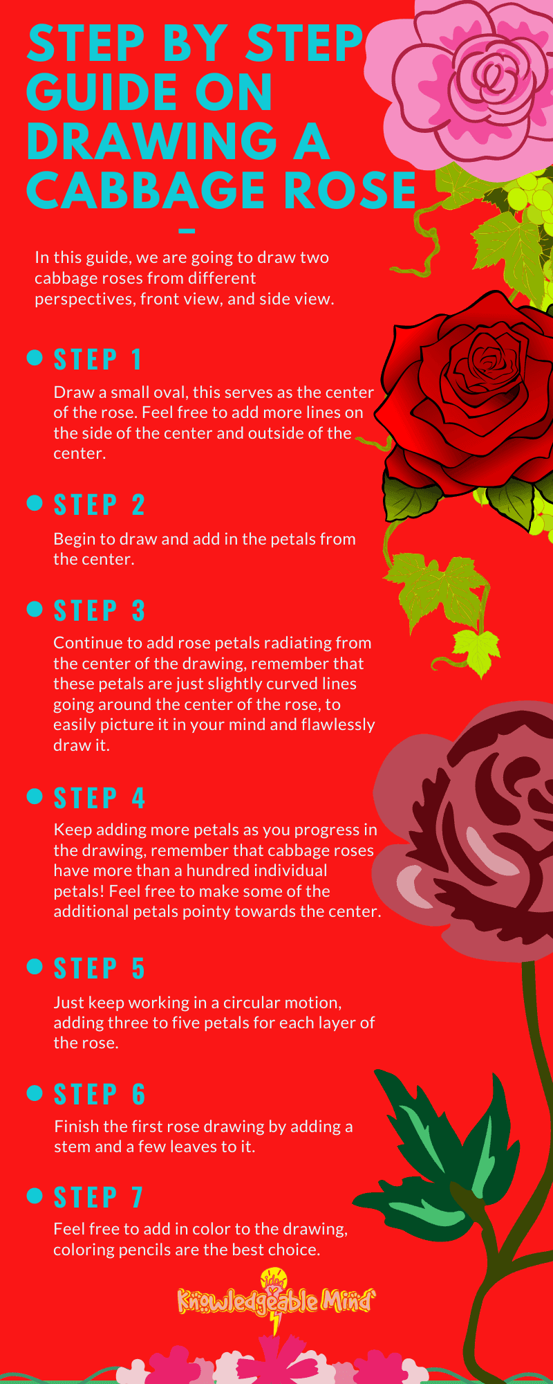 how to draw a cabbage rose (infographic)