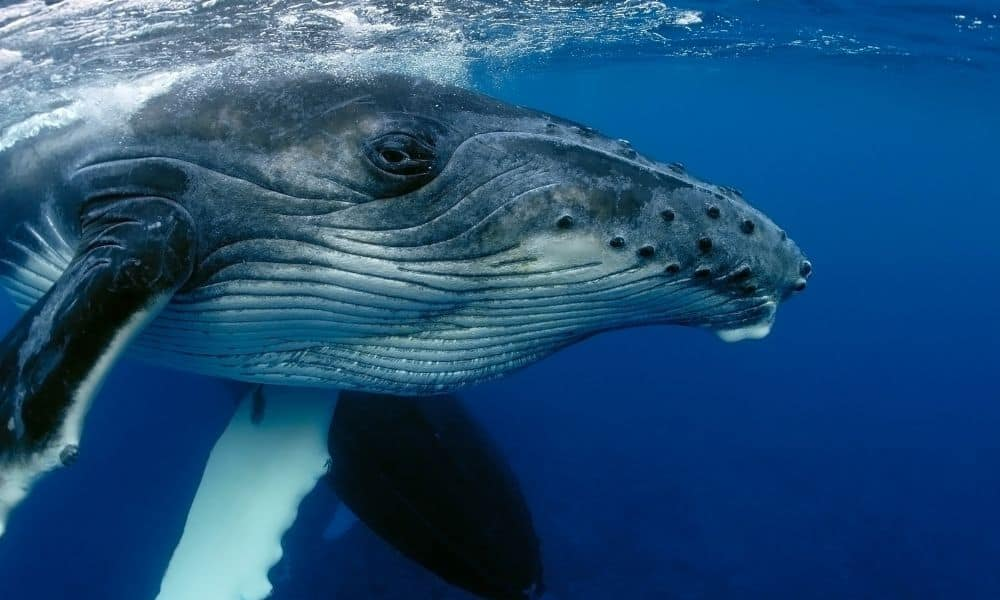 Amazing Animal Facts Whale
