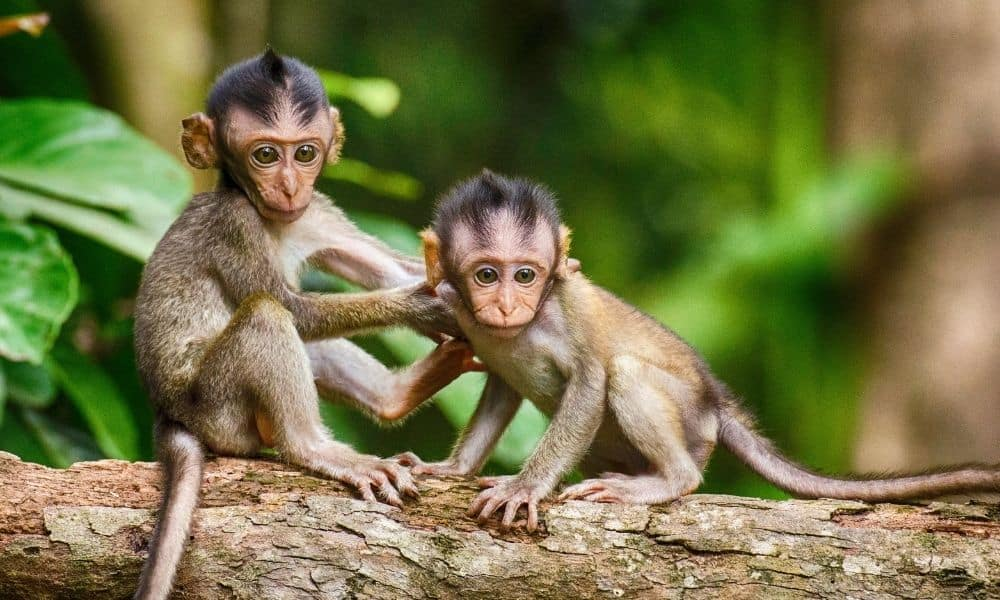 Monkey Facts 1