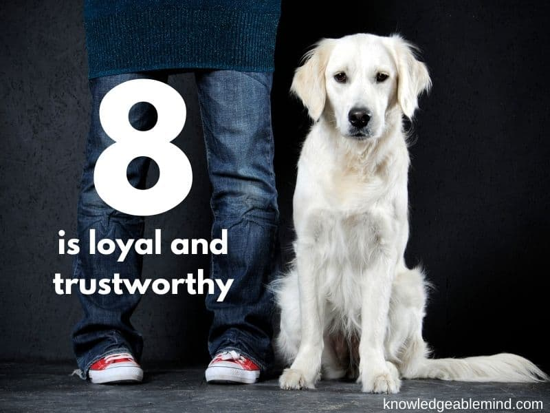 8 is loyal and trustworthy
